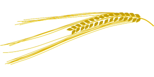 Magnesio: alimenti che lo contengono - una spiga di grano giallo oro su sfondo azzurro